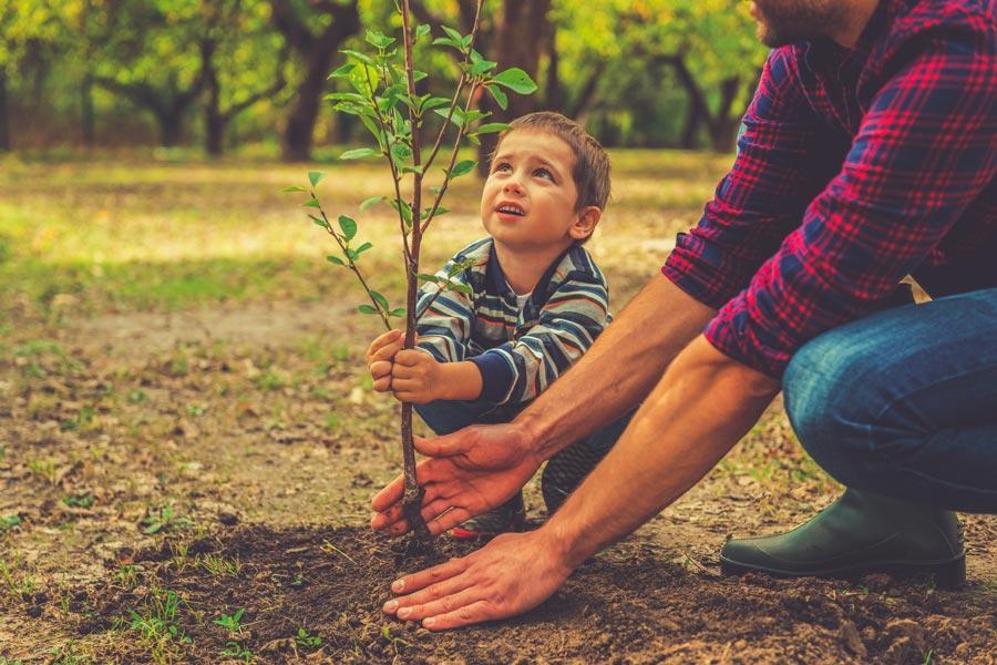 Спасение для планеты: сажать деревья