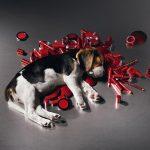 В Брюсселе запретят тестирование на животных