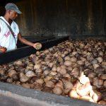 Микробы сделают экологически чистую ткань из кокосовых отходов