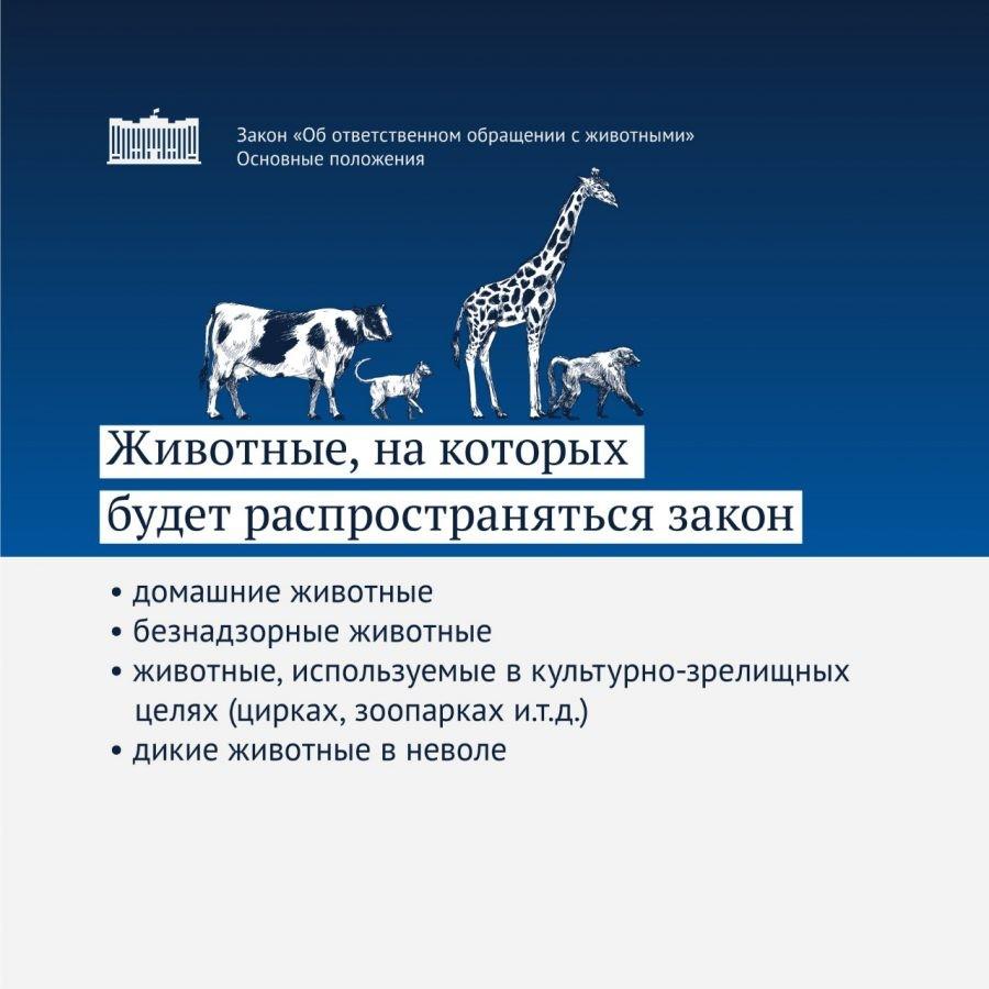 """Ура! На днях Госдумой в третьем, окончательном чтении был принят закон """"Об ответственном обращении с животными""""!"""